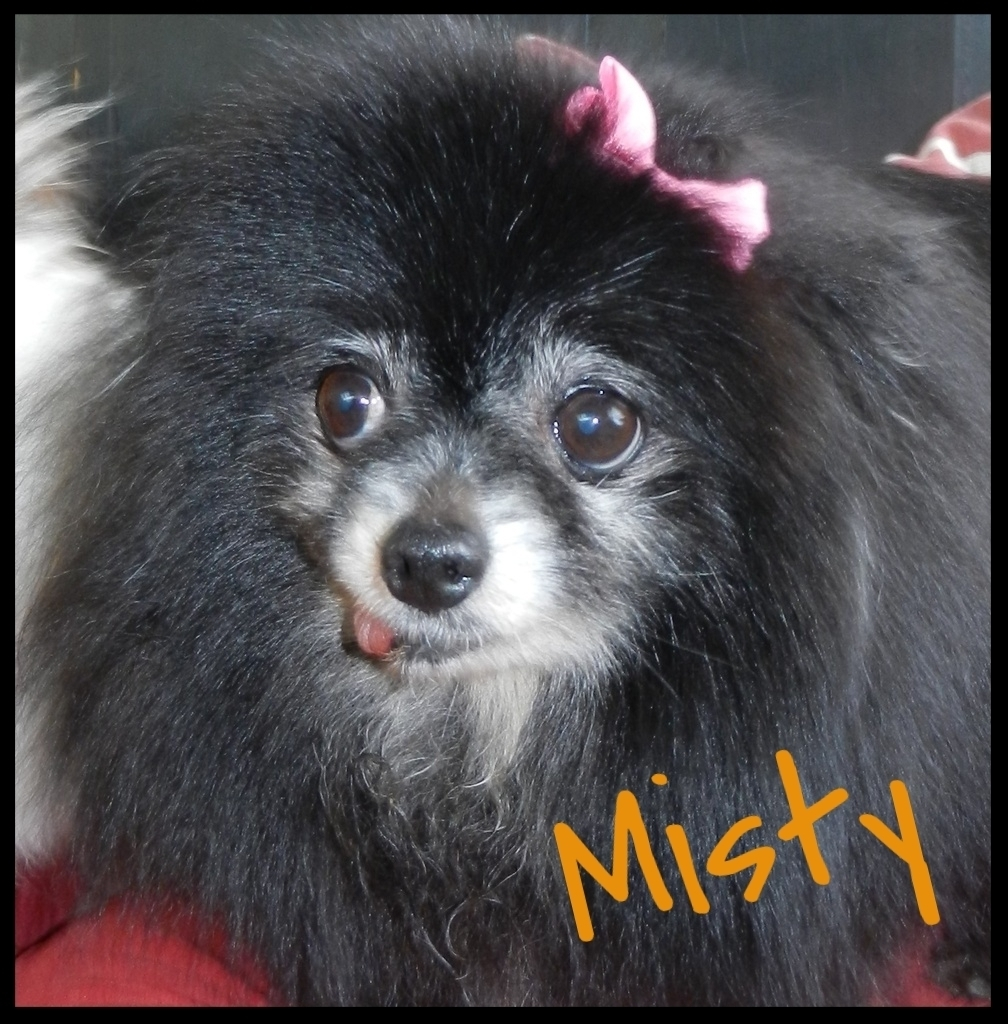 Adoptable Poim Misty 2016