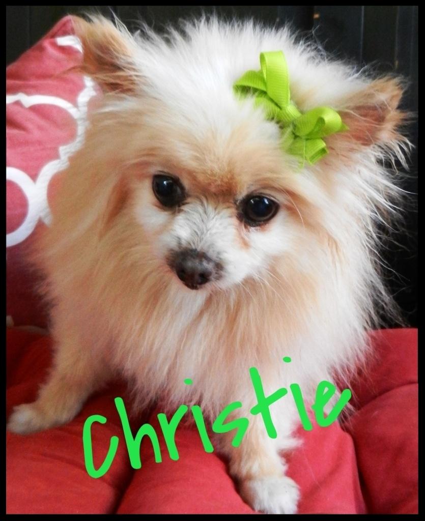 Adoptable Pom OC Christie Frame
