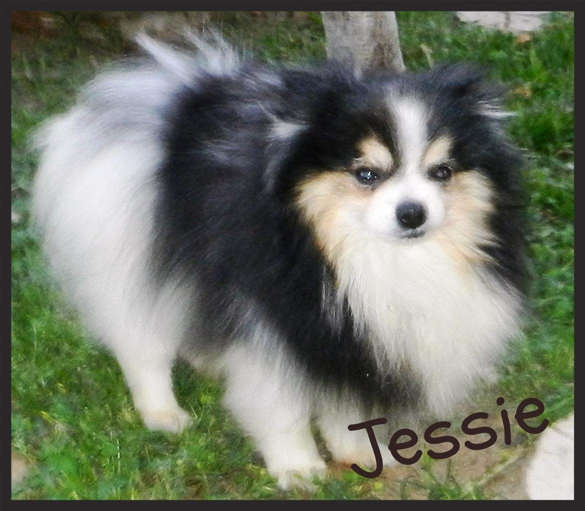 Framed Jessie Tri