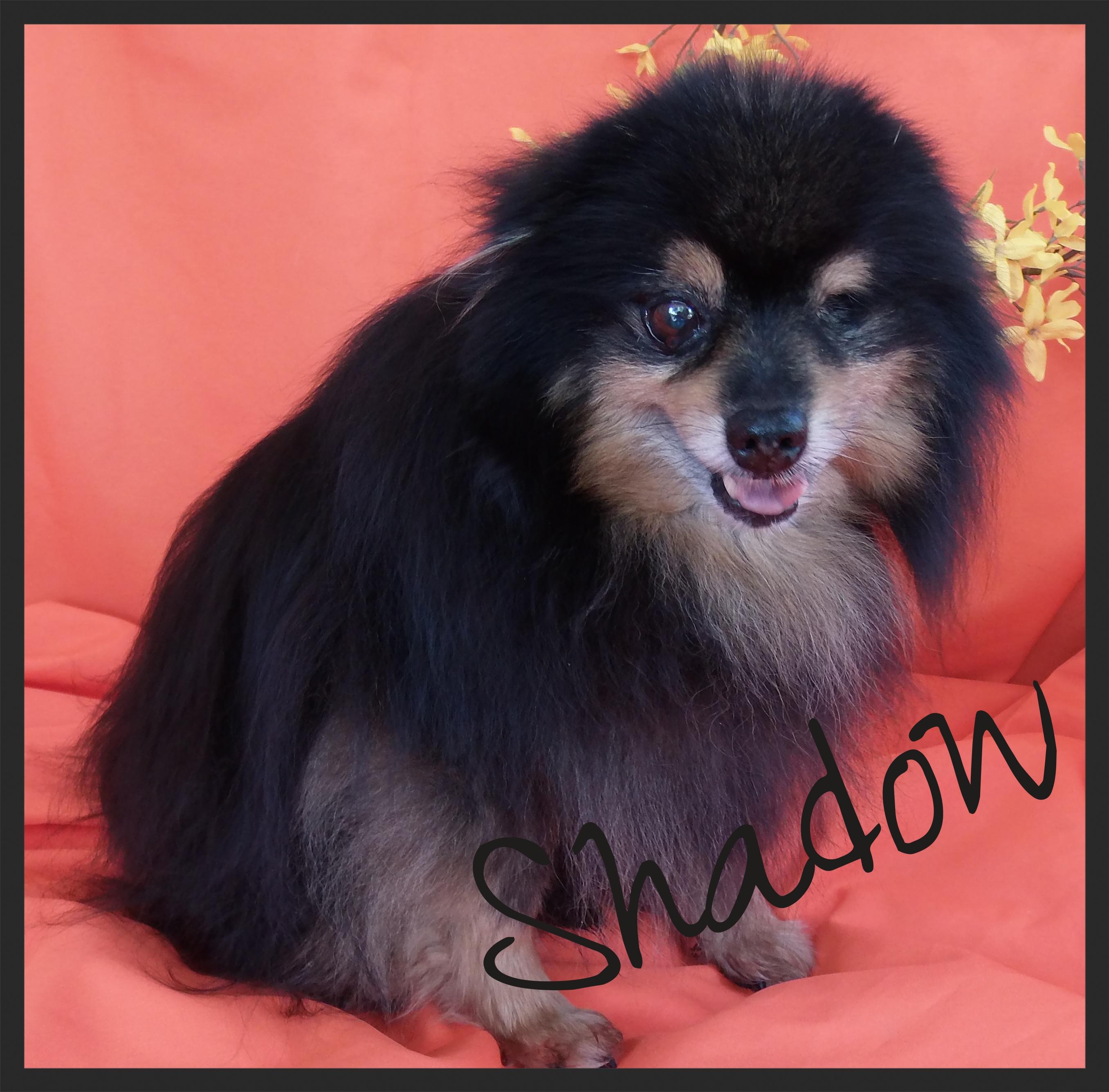 ShadowOrange_zps2c705476