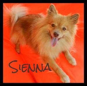 Sienna Border