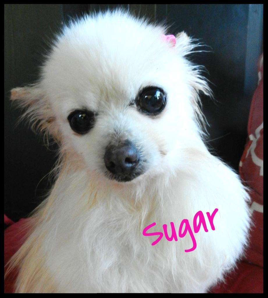 Sugar 05-06-2016