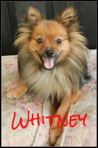 Whitney Border