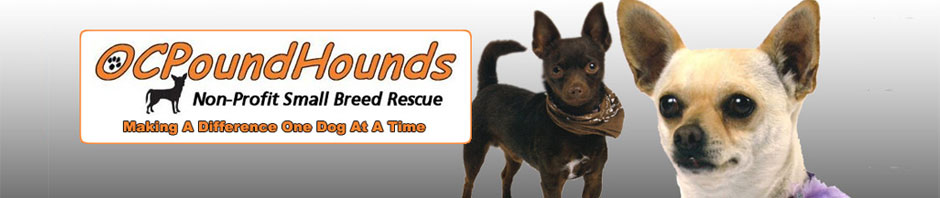 OCPoundhounds Small Breed Rescue - Homestead Business Directory