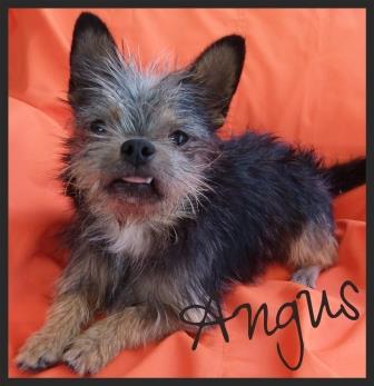 Angus Orange