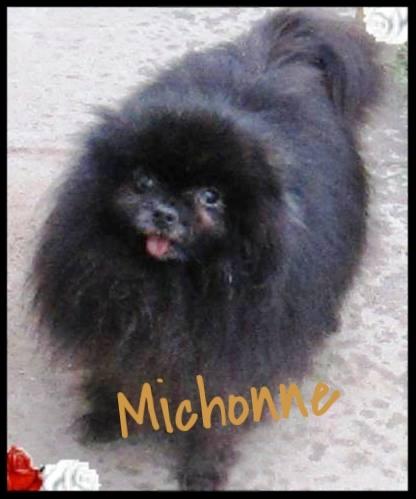 Michonne 2016